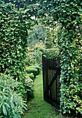 Gartentor durch Fagus-Hecke (Buche)