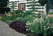 Vorgarten mit Birnen als Spalier, Centranthus ruber albus / Spornblume weiß, Tradescantia / Dreimasterblume, Heuchera / Puppurglöckchen