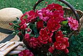 Frisch geschnittene Blüten von Rosa / Rose 'Edgar Degas' Malerrose in Korb