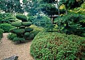 Japanischer Garten mit Juniperus / Wacholder -Formschnitt, Koniferen und Azalea als Hecke