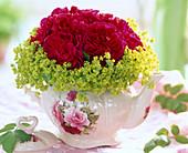 Rosa ' Rose de Rescht ' (Duftrose)