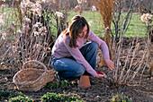 Junge Frau schneidet Pflanzen im Beet zurück