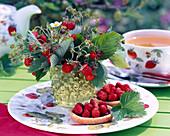 Fragaria hortensis (strawberry)