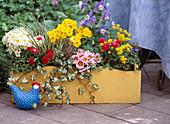 Gelber Holzkasten mit Primula elatior 'Crescendo reinweiß', 'Crescendo Gelb'