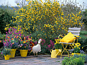 Kerria japonica 'Pleniflora' / gefüllt blühender Ranunkelstrauch