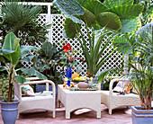 Tropischer Blattschmuck, Trachycarpus, Musa acuminata / Banane, Alocasia