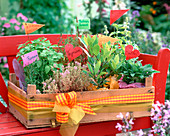 Fruit crate with Melissa (lemon balm)