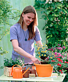 Orangen Ampeltopf bepflanzen