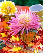 Dahlia (rosa-weiße Kaktusdahlie)