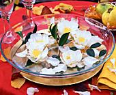 Camellia sasanqua ' Hinode-Gumo ' (Kamelienblüte)