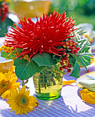 Dahlia (rote Kaktusdahlie)