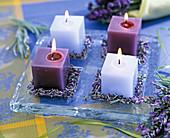 Viereckkerzen auf Glasplatte, Lavandula (Lavendelblüten)