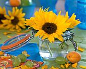 Helianthus (Sonnenblume)