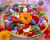 Lycopersicon (Tomate) mit Mozarella