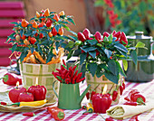 Capsicum annuum (Zierpaprika), Paprika, Peperoni, Chili, Gemüsekerzen