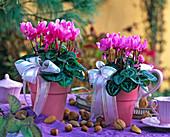 Cyclamen (Alpenveilchen), rosa Töpfe, Schleifen, Nüsse, Mandeln, rosa Geschirr