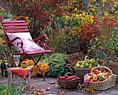 Körbe mit Cydonia (Apfelquitten), Malus (Äpfel) vor Herbstbeet
