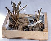 Dahlia- Hybriden (Dahlien) in Holzkiste gelegt