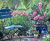 Sitzplatz am Beet mit Tulpen und Kamelie