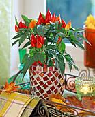 Capsicum annuum (Zierpaprika) in Mosaiktopf, Blechtablett, Herbstlaub