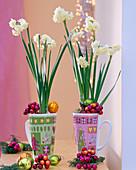 Narcissus ' Bridal Crown ' (Duftnarzissen) in Weihnachtsbechern, Baumschmuck