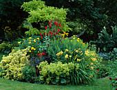 LAUNA SLATTERS Garden OXFORDSHIRE: Yellow AND Red BORDER with ROBINIA, HEMEROCALLIS, ALCHEMILLA MOLLIS, DAHLIA 'BISHOP of LLANDAF' , EUONYMUS 'Emerald N Gold'