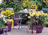 Frühlingsterrasse mit Narzissen