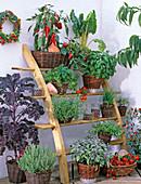 Anlehnregal mit Kräutern und Gemüse im Topf