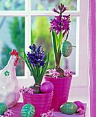 Hyacinthus (Hyazinthen) in pinken Übertöpfen