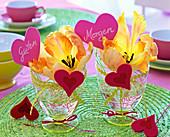Blüten von Tulipa (Tulpen) in Gläsern mit Blümchenband