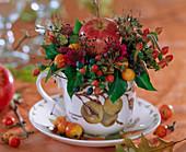 Malus / Äpfel und Zieräpfel, Hedera / Efeu