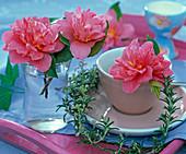 Gefüllte pinkfarbene Blüten von Camellia (Kamelie) in Glas und Espressotasse