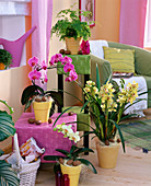 Cymbidium (Kahnorchidee, hellgrün), Phalaenopsis (Malayenblume)