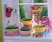 Aussaat von Sommerblumen auf der Fensterbank: Tagetes (Studentenblumen)