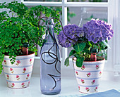 Urlaubsbewässerung für Hydrangea (Hortensie) und Adiantum