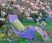 Korbliege unter Magnolia soulangeana (Tulpenmagnolie)