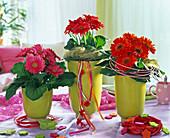 Gerbera in pink und rot in hellgrünen Übertöpfen, dekoriert mit Sisal