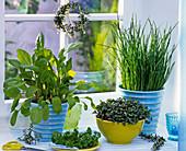 Herbs on the kitchen window, Rumex, Raphanus