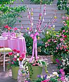Prunus triloba Stämmchen (Mandelbaum) unterpflanzt mit Bellis