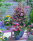 Camellia 'Spring Festival' (Kamelie), Narcissus (Narzissen), Tulipa
