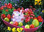Bellis (Tausendschön), Keramikhuhn und bunte Eier