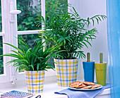 Chlorophytum laxum (Grünlilie), Chamaedorea (Bergpalme)