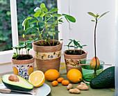 Citrus (Kumquat, Mandarine), Arachis (Erdnuß), Persea (Avocado)