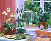 Shin Yong Holz: Phalaenopsis (Malaienblume), Pteris (Saumfarn), Dracaena