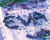 Buchstaben aus Lavandula (Lavendel) zum Namen 'Eva' gelegt auf Lavendelhandtuch