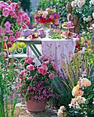 Rosa (Rose), Calibrachoa (Zauberglöckchen) in Topf, dahinter Tisch