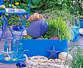 Shin Yong Wasser: Wasserspiel Muschel, Cyperus