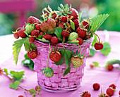 Fragaria (strawberries) in pink basket