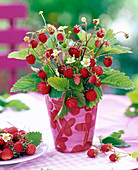 Bouquet of Fragaria with fruits, leaves and flowers
