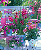 Gladiolus (Zwerggladiolen), Dahlia (Dahlie)